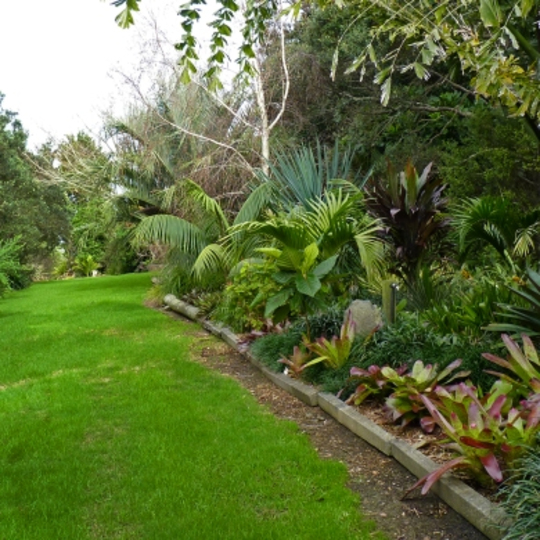 A tour around some lovely gardens in sub tropical auckland for Native garden designs nz
