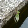 Dragonfly_009