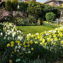 Back_garden_spring