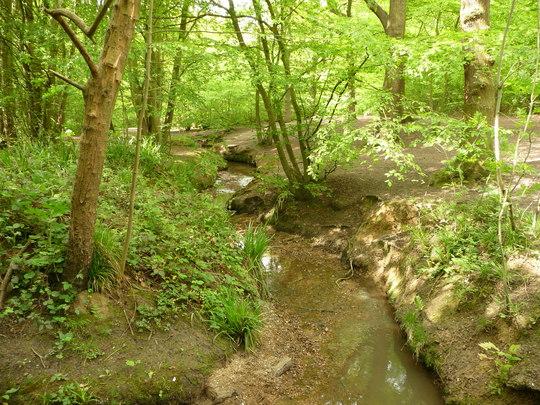 Belfairs Woods Amp Hadligh Great Wood Grows On You