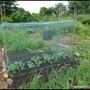 Brassica_cage