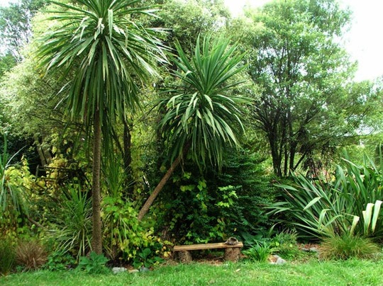 Some lovely gardens in new zealand grows on you for Native garden designs nz