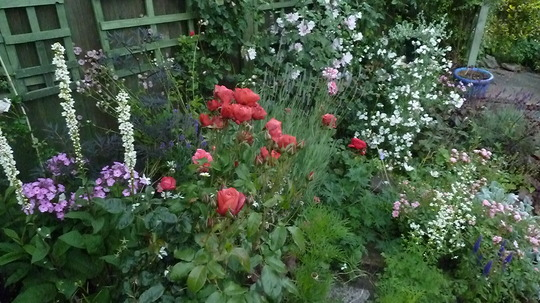 equisetum japonicum - and sagitteria | gardens | Pinterest | Search