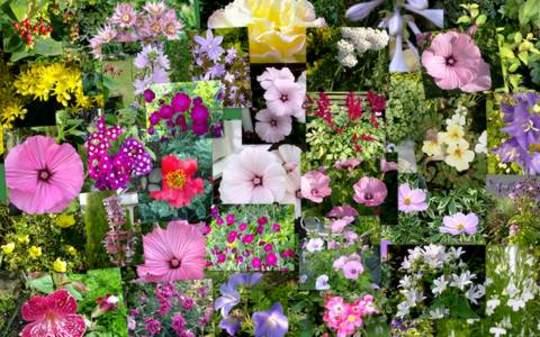 51st wedding anniversary flower