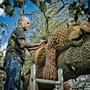 Nthwld-84-2__leopard.