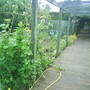 Veg_patch__2_