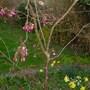 Spring_flowers_003