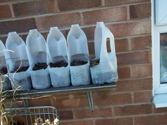 Milk Bottle Hanging Planters Grows On You