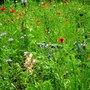 Wild_garden_.26