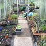 Greenhouse_1