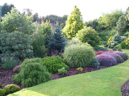 Foxhollow garden and some colourful conifer gems grows for Slow growing trees for front yard