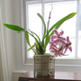 Orchid_feb_2019_400x