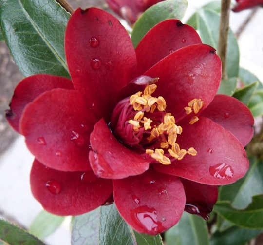 Preparing For Summer In Camellia Corner Grows On You