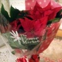 Poinsettia_from_jonathan_on_living_room_table_29th_december_2017