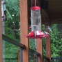 Hummers_big_picture