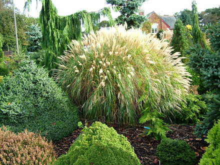 A Specimen Of Miscanthus Sinensis Yakushima Dwarf Makes Contrast To The More Somber Tones Conifers In This Planting