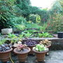 7_-_back_garden_from_the_patio