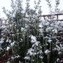 P1000204__jr__snow.