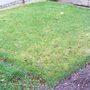 1_lawn-1