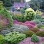 My._intro._garden_view__4
