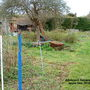 Allotment_general_view___apple_tree_2010-03-30