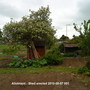 Allotment_-_shed_erected_2010-05-07_001