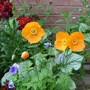 Garden_update_001