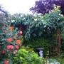 Aaap1030353_june_2010._back_garden_roses.