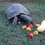 Turtles_008
