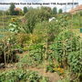 Allotment_view_from_top_11th_august_2010_001