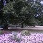 Kew_garden_02