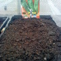 Allotment_green_pepper_seeds_sown_on_15_02_2011
