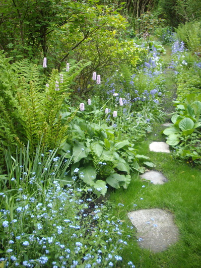 My Very Small Woodland Garden : Grows On You