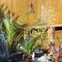 Garden_026