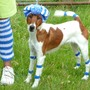 P1000287_truffle_6_legs._stripes_hat_edit_wag