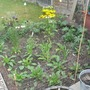 Cottage_garden_aug11_002