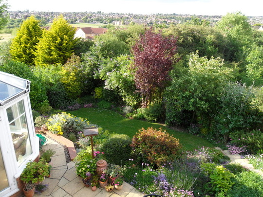 Back garden before after part 2 grows on you - Practical tips for gardening in june ...