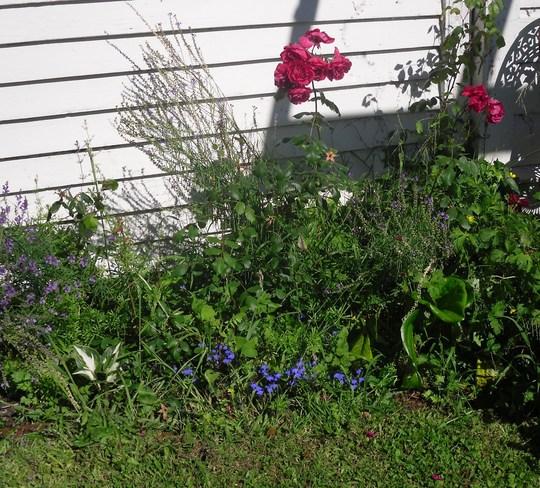 Garden Over Christmas Grows On You