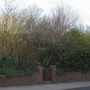 Sloping_garden_feb12_047