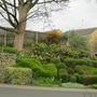 Garden_2878