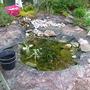New_pond_1_001