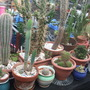part of my cleaned up cacti.....