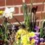 My_Garden_2009_055.jpg