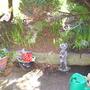 My_garden_2009_062