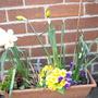 My_Garden_2009_032.jpg