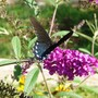 Butterfly View 2