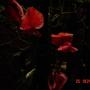 Evening_july_25_001