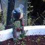 Our_garden_in_2009_806
