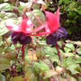 Our_garden_in_2009_915