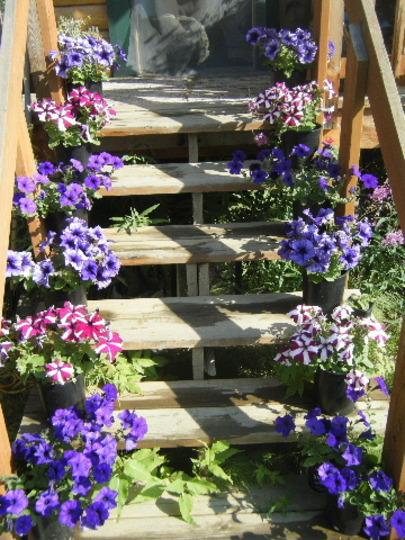 Steps July 15